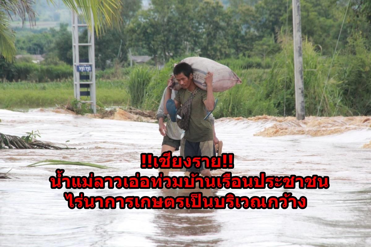 !!เชียงราย!! น้ำแม่ลาวเอ่อท่วมบ้านเรือนประชาชน ไร่นาการเกษตรเป็นบริเวณกว้าง